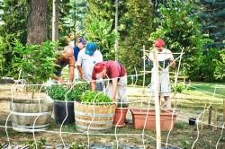 Villa Ottavia - Centro Riabilitazione Ferrero - attività agricola